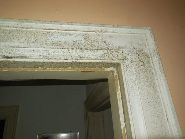 Casing - Bad Mold