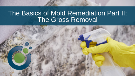 Mold Remediation the Basics Part II